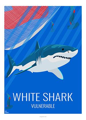 Eric Garence artiste Niçois WhiteShark Requin blanc dessin art